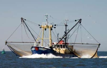 trawling-destroying-other-marine-life