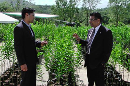 Cumuto/Manzanilla MP Colin Partap, left, and Food Production Minister Devant Maharaj, look at citrus seedlings produced at Mapar. Photo: Alana Boodoo-Suraj