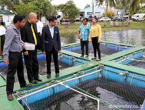 Fish inspection: Food Production Minister Devant Maharaj, third from left, CEPE chairman Adesh Deonarine, second from left, and officials inspect a floating tilapia raft cage system in Ste Madeleine yesterday.  Author: ANSEL JEBODH